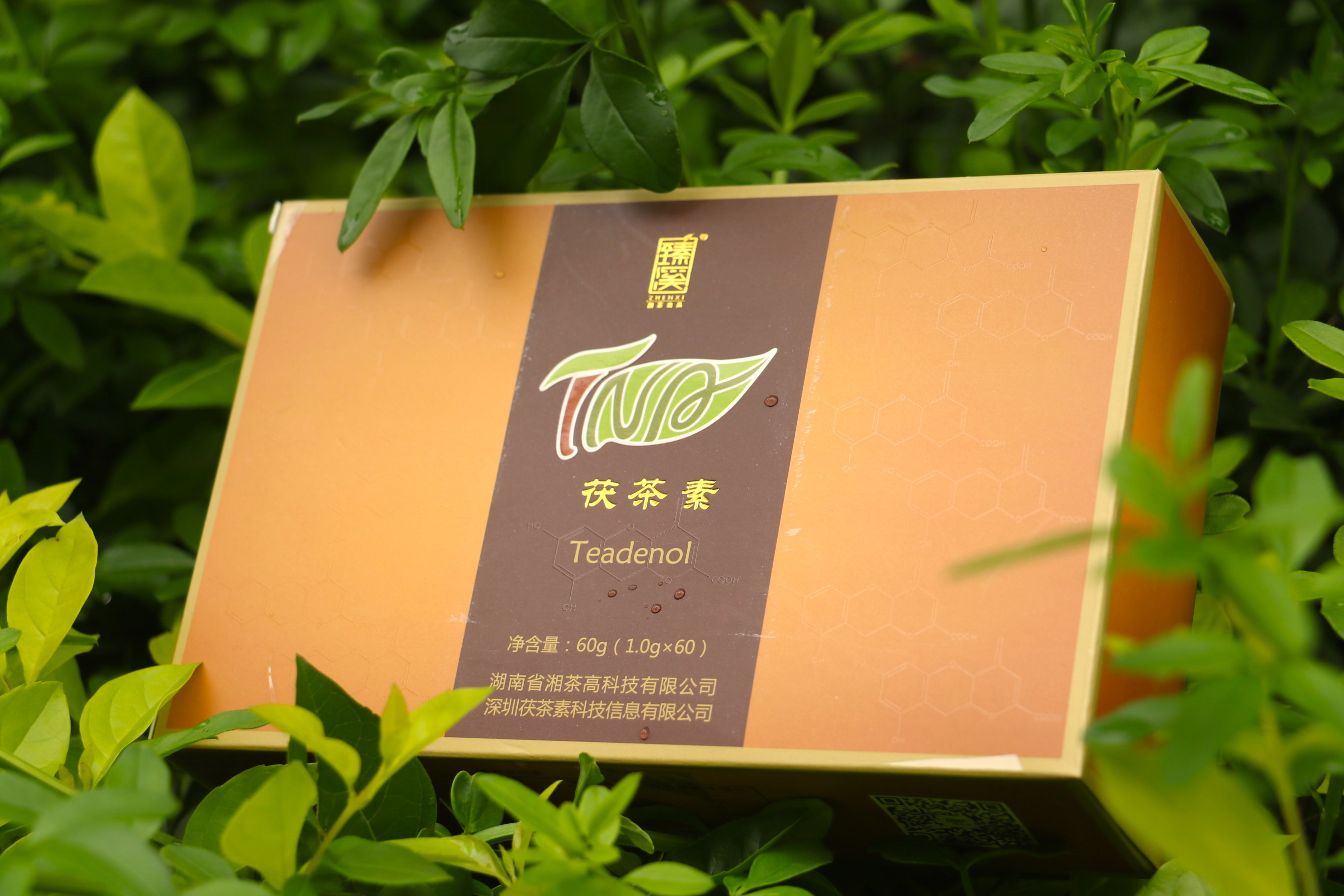 茯茶素产品4.jpg